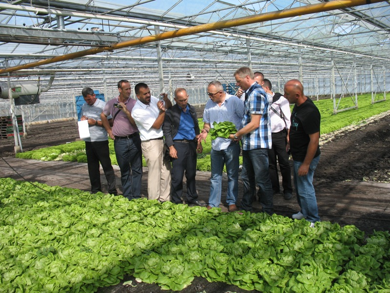 20120829z06-zegge-repestraat-15-visit-to-lettuce-grower-paul-kessel-field-excursion